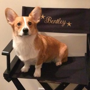 Bentley the Corgi actor stars in Dirk Gentley