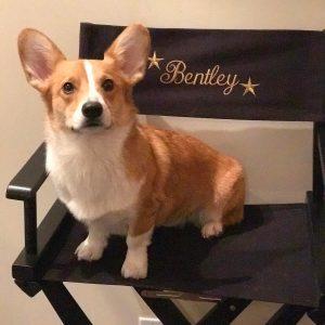 Bentley the Corgi actor stars in Dirk Gentley